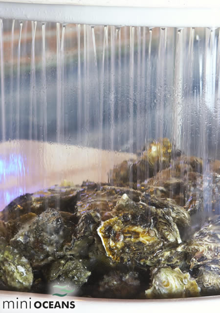 Live Shellfish Display Units Oyster Tanks